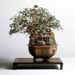Makieta Bonsai
