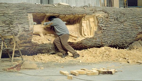 mlode-drzewo-03
