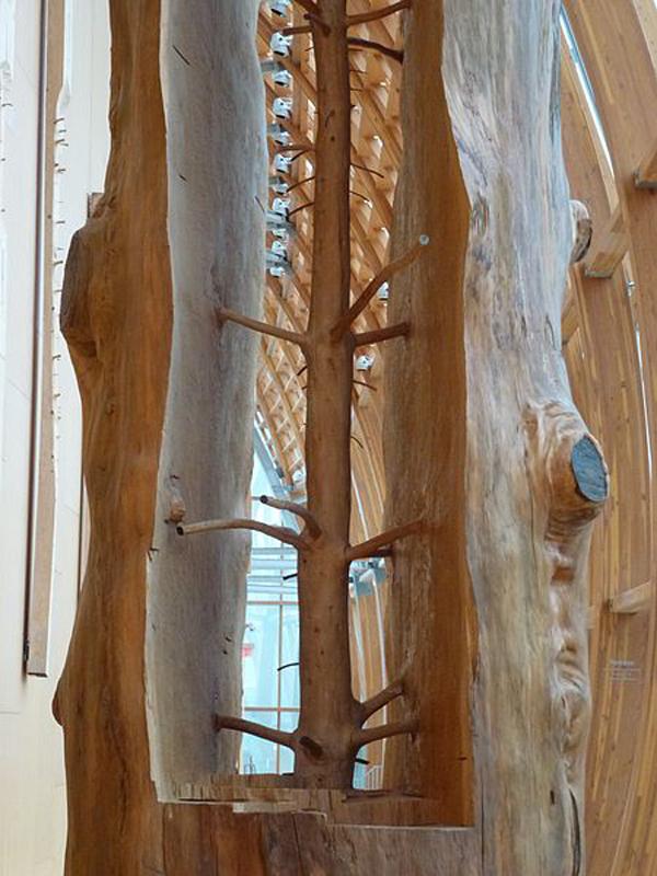 mlode-drzewo-05